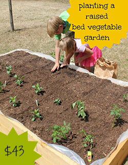 Planting a Raised Vegetable Garden