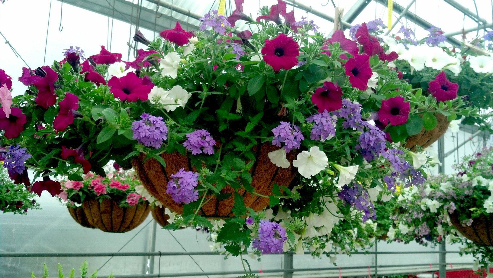 How To Create Beautiful Hanging Baskets On A Budget Passionate Penny Pincher
