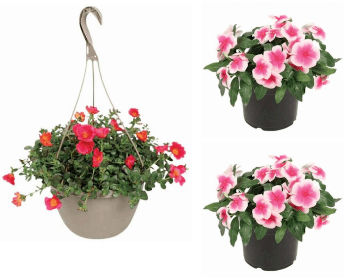 Hanging Flower Baskets At Lowes : Lowe s hanging flower baskets or planters just